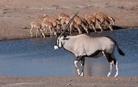 Namibia, Etosha NP, Chudop, Oryx, black-faced impala Fine-Art Print