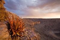 Namibia, Fish River Canyon National Park, desert plant Fine-Art Print