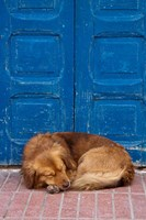 Sleeping Dog, Essaouira, Morocco Fine-Art Print