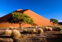 Trees with Sossosvlei Dunes, Namib-Naukluff Park, Namibia Fine-Art Print