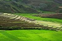 Spectacular green rice field in rainy season, Ambalavao, Madagascar Fine-Art Print