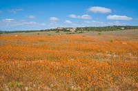 Field of Spring flowers, South Africa Fine-Art Print