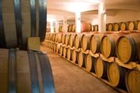 Stellenbosch, South Africa, Stellenbosch winery Fine-Art Print