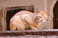 Stray Cat in Fes Medina, Morocco Fine-Art Print