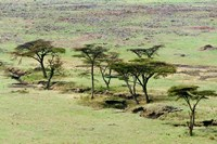 The Bush, Maasai Mara National Reserve, Kenya Fine-Art Print