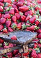 Strawberries for sale in Fes medina, Morocco Fine-Art Print