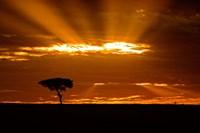Sunrise, Maasai Mara, Kenya Fine-Art Print