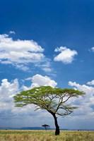 Umbrella Thorn Acacia, Serengeti National Park, Tanzania Fine-Art Print