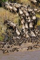 Wildebeest crossing river Mara, Maasai Mara Wildlife Reserve, Kenya Fine-Art Print