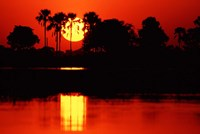 Tropical Sunset in North Central Botswana Fine-Art Print