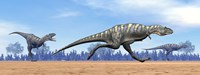 Three Aucasaurus dinosaurs running in the desert Fine-Art Print