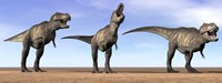 Three Tyrannosaurus Rex dinosaurs standing in the desert Fine-Art Print
