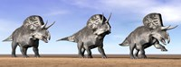 Three Zuniceratops standing in the desert Fine-Art Print