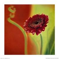 Summer Colours 3 Fine-Art Print