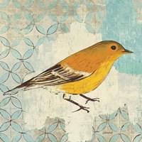 Pine Warbler Fine-Art Print