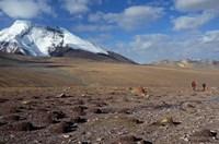Towards The Summit Of Kongmaru La, Markha Valley, Ladakh, India Fine-Art Print