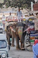 Colorfully decorated elephant, Amber Fort, Jaipur, India Fine-Art Print