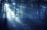 Beam of light in a dark forest, Liselund Slotspark, Denmark Fine-Art Print