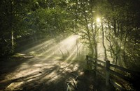 Sunrays shining through a dark, misty forest, Liselund Slotspark, Denmark Fine-Art Print