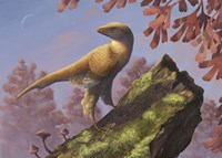 Eosinopteryx brevipenna perched on a tree branch Fine-Art Print
