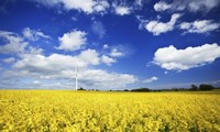 Wind turbine in a canola field against cloudy sky, Denmark Fine-Art Print