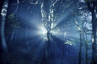 Misty rays in a dark forest, Liselund Slotspark, Denmark Fine-Art Print