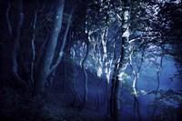 Dark forest, Liselund Slotspark, Denmark Fine-Art Print