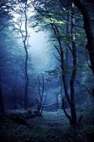 Misty, dark forest, Liselund Slotspark, Denmark Fine-Art Print