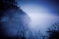 Silhouettes of trees and branches in a dark, misty forest, Denmark Fine-Art Print