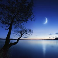 Silhouette of a lonely tree in a lake against a starry sky and moon Fine-Art Print