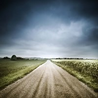 Country road through fields, Denmark Fine-Art Print