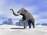 Large mammoth walking slowly on the snowy mountain Fine-Art Print