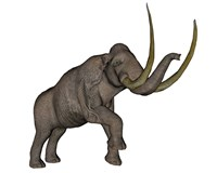 Large mammoth, white background Fine-Art Print