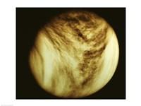 Venus - tan Fine-Art Print