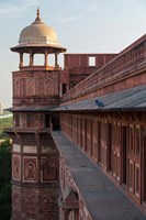 Two pigeons sit on the roof's ledge, Agra fort, India Fine-Art Print