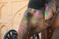 Decorated elephant at the Amber Fort, Jaipur, Rajasthan, India. Fine-Art Print