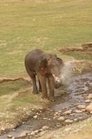 Elephant at waterhole, Corbett NP, Uttaranchal, India Fine-Art Print