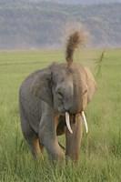 Elephant dust bath, Corbett NP, Uttaranchal, India Fine-Art Print