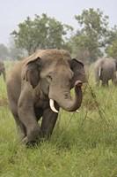 Elephant Greeting, Corbett National Park, Uttaranchal, India Fine-Art Print