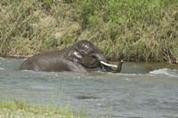 Elephant taking bath, Corbett NP, Uttaranchal, India Fine-Art Print