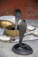 Snake Charming, Oris, India Fine-Art Print
