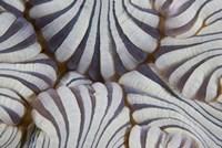 Sea anemone, Marine life Fine-Art Print