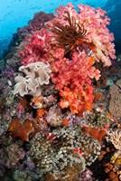 Coral, Raja Ampat, Papua, Indonesia Fine-Art Print