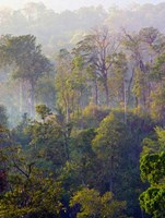 Sulawesi Tangkoko Rainforest, Sulawesi Fine-Art Print