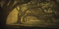 Oak Alley Morning Shadows Fine-Art Print