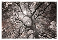 Ethereal Tree Fine-Art Print