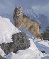 Austere Ascent (Lynx) Fine-Art Print