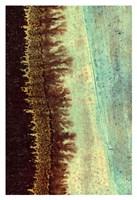 Lichen I Fine-Art Print
