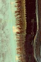 Lichen II Fine-Art Print