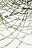 Moss Vine Fine-Art Print